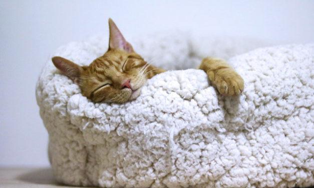 Ύπνος και μάθηση