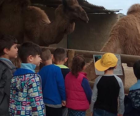 Η φάρμα των στρουθοκαμήλων