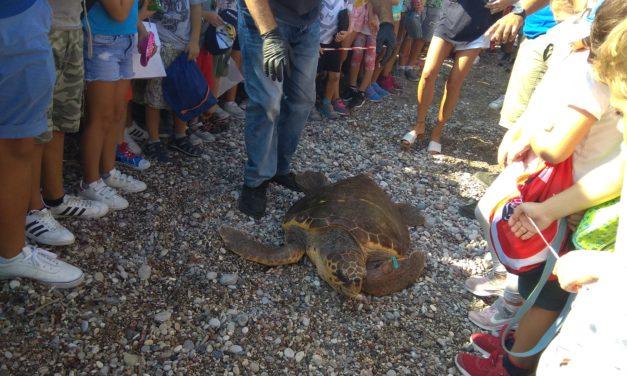 Aπελευθέρωση θαλάσσιας χελώνας