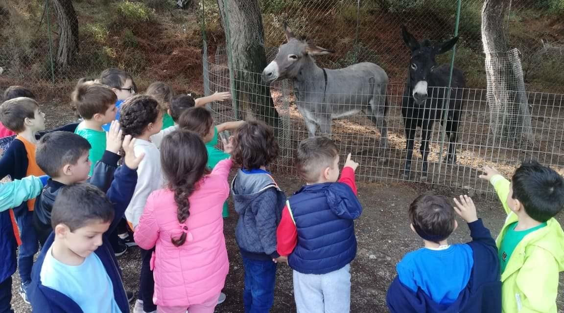 Εξερευνώντας τον κόσμο των ζώων!